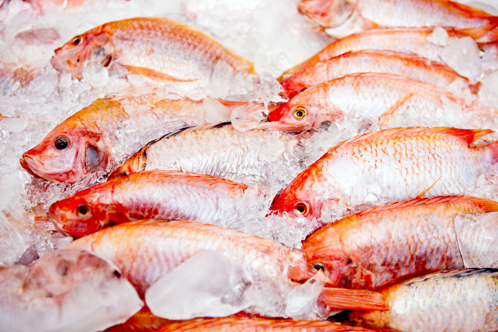 Bunch of raw frozen fish on ice-1